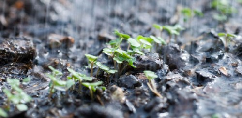 watering_seed